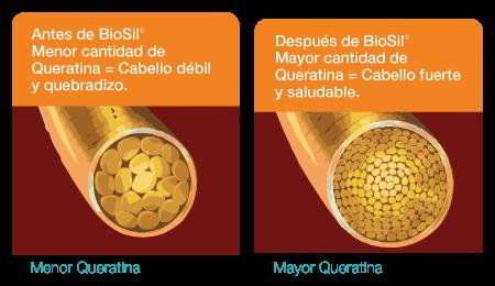 Mayor Queratina